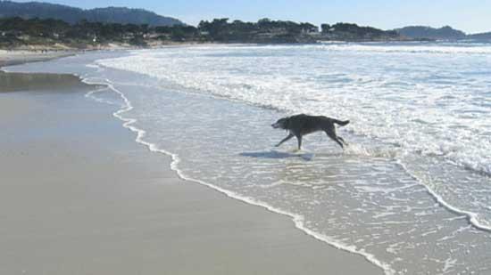 Reiki dog rescue article
