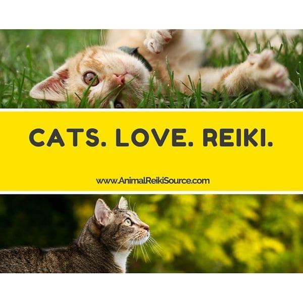 Cats love reiki 600px