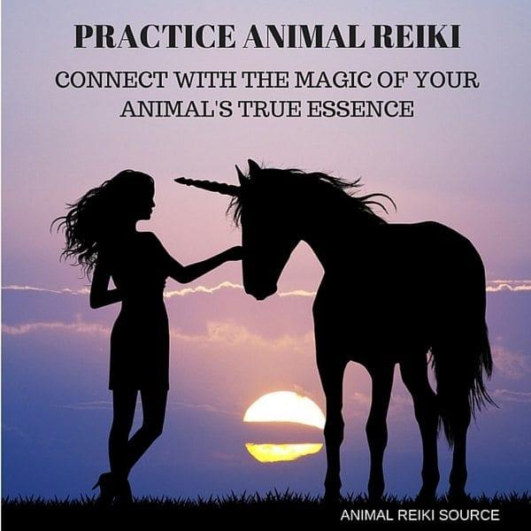 practice animal reiki 02 600px