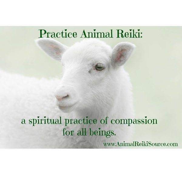 practice animal reiki 600px