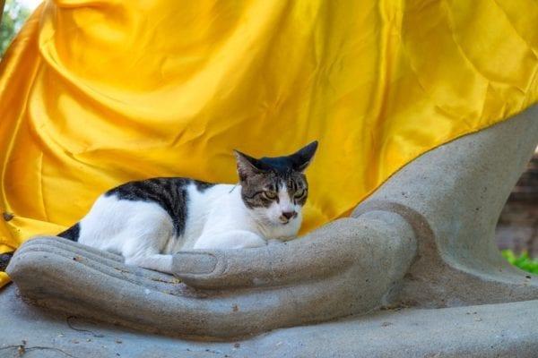 a cat sitting on a buddha statues hand