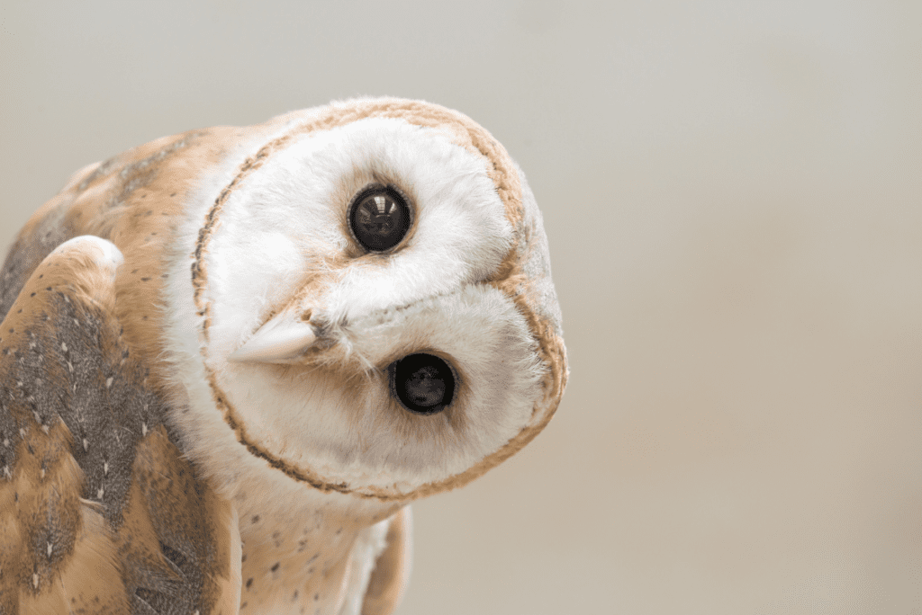 an owl tilting its head
