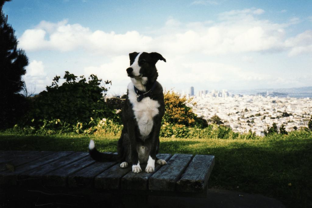 kathleen's dog named dakota