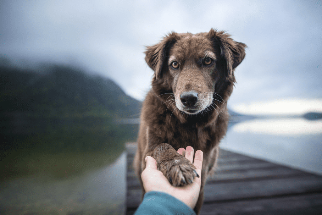 a brown dog reaching out its paw and a person holding it by a lake