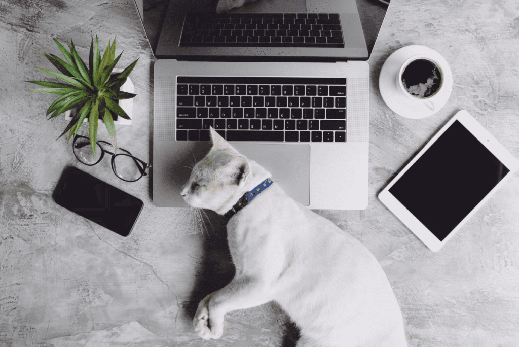 a white cat laying on a laptop next to a pair of glasses, coffee, and a houseplant