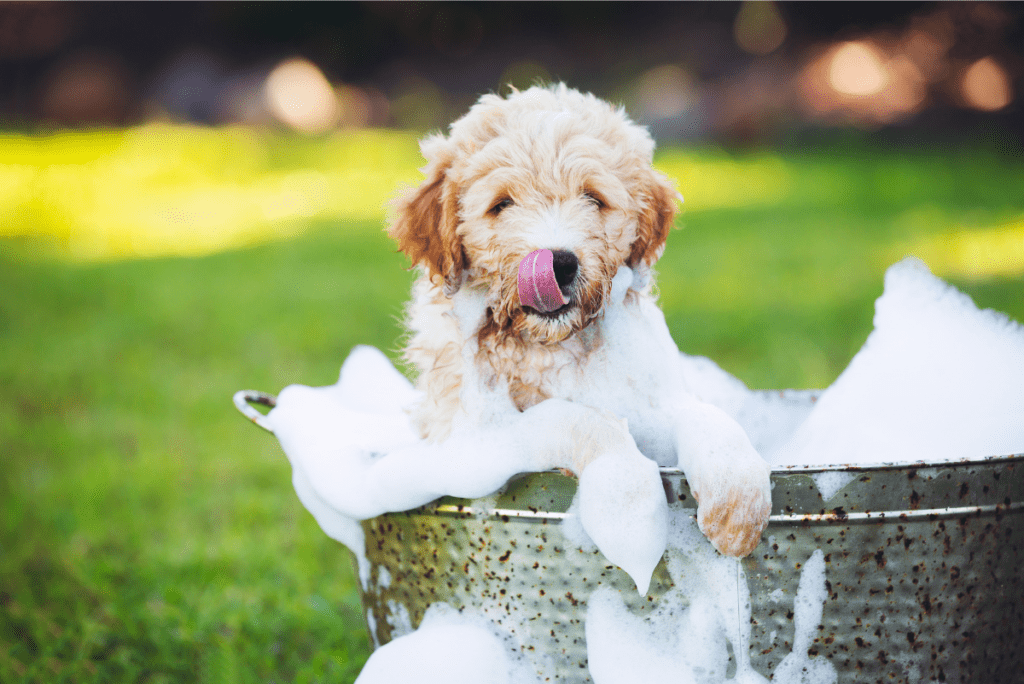 a puppy in a bucket of soap and water