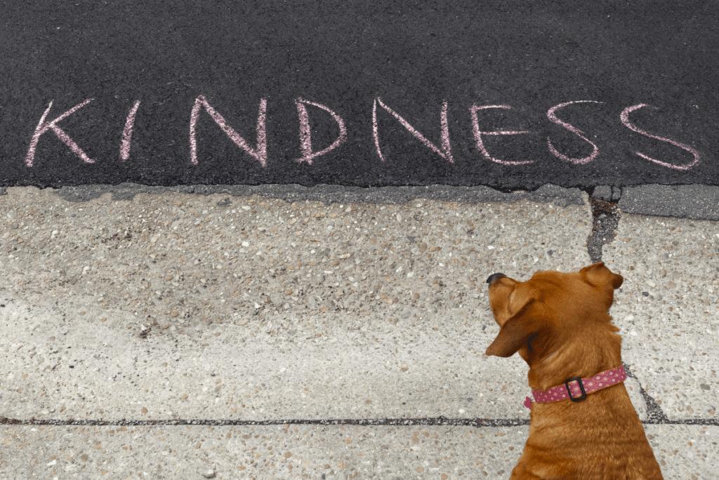 a dog next to sidewalk chalk that says kindness