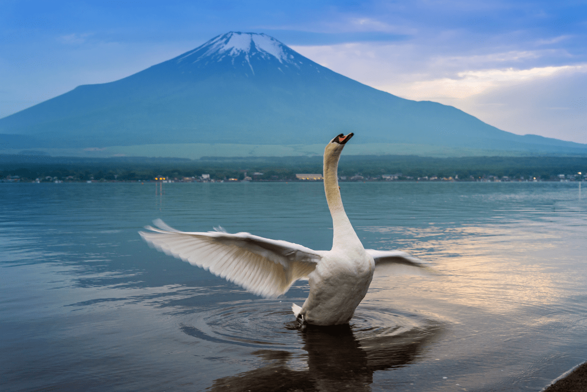 a swan in a lake with a mountain behind it