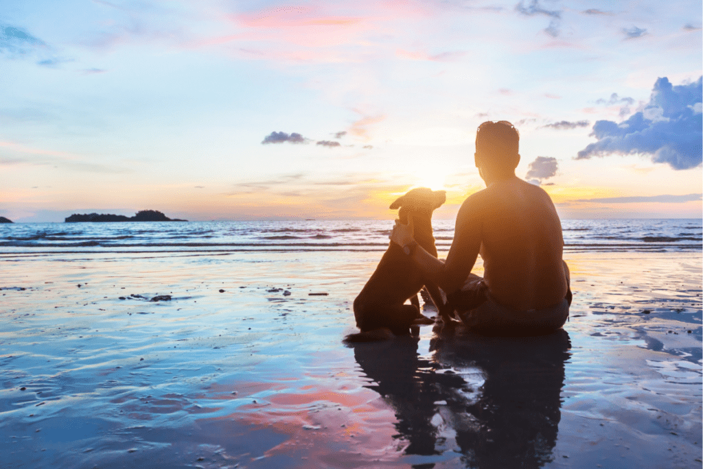 a person sitting with their dog on a beach in the sunset