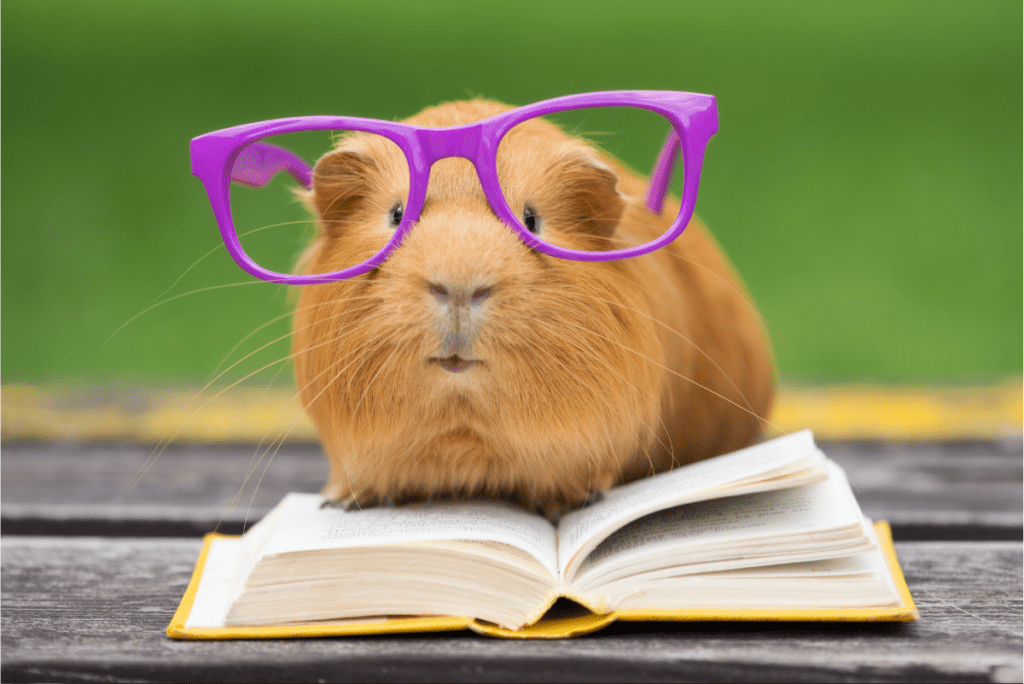 a guinea pig in purple glasses on an open book