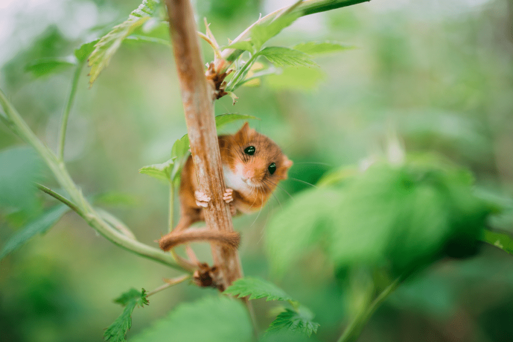 a mouse hanging on a tree branch