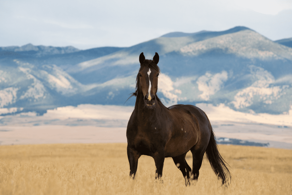 a horse standing in a field with mountains behind